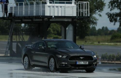 Mustang 5 (1 of 1)